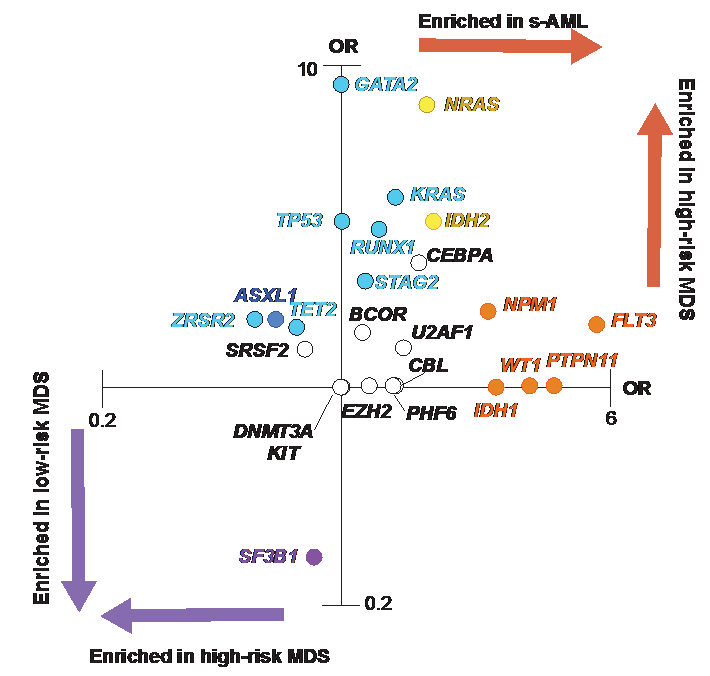 figure 2 enrichment of mutations in sAML and HR MDS